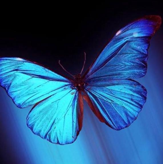 """Команда регрессивного гипноза """"Эффект бабочки"""""""