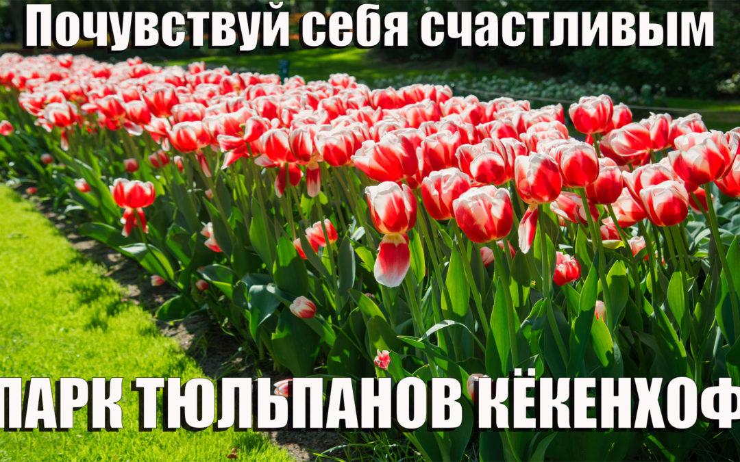 Парк Тюльпанов Кекенхоф Голландия, Повышение Вибраций, Счастье, Регрессивный гипноз