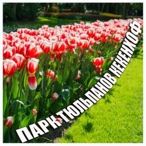 Тюльпаны сайт инстаграмм